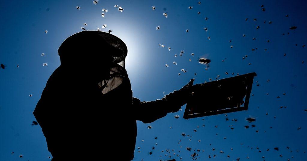 TikTok bee-f?  Kritik TikToker terhadap penyebaran influencer peternakan lebah
